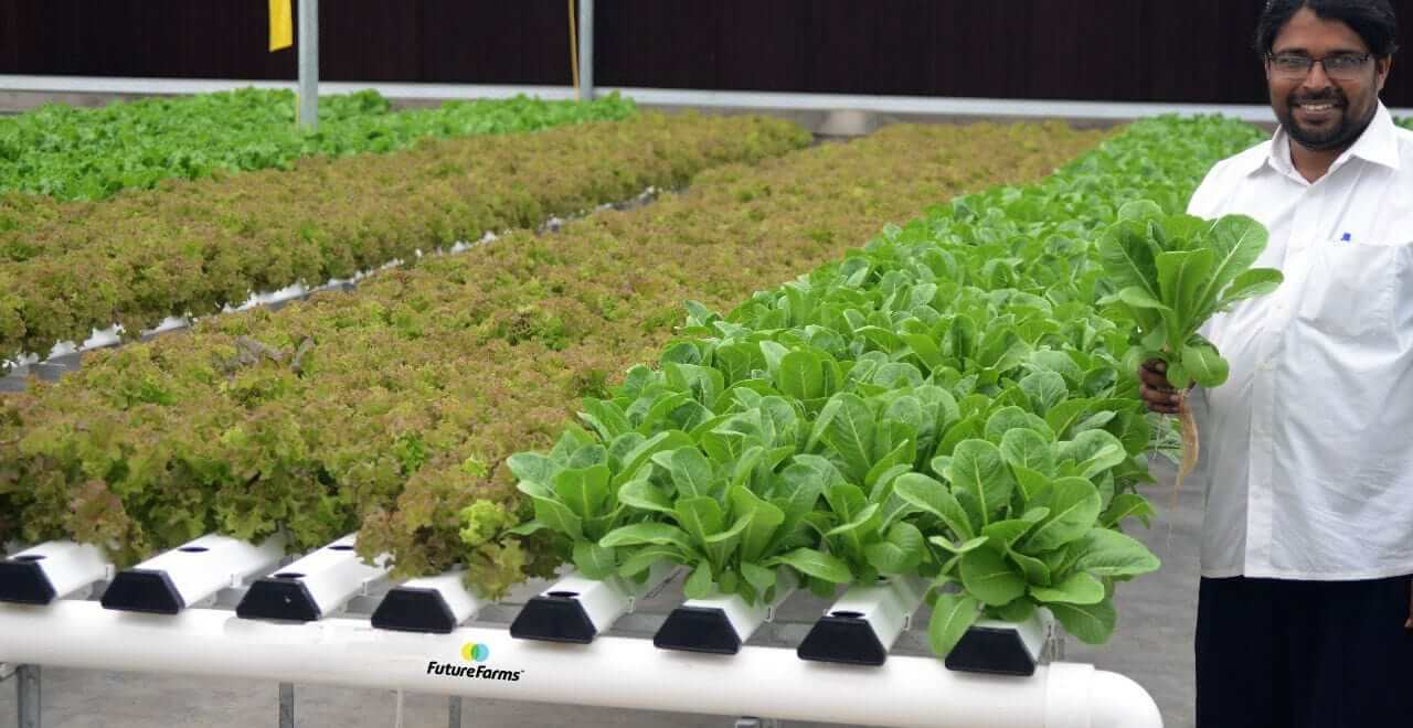 Large Scale Hydroponics In India |