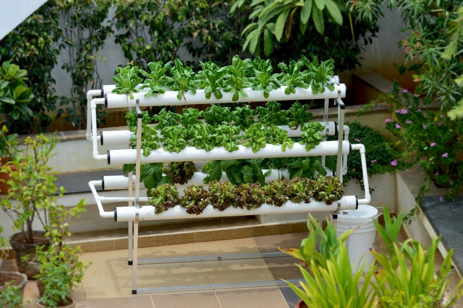 What Is Vertical Hydroponic Gardening